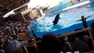 江ノ島水族館 GWお出かけ5月3日2014年