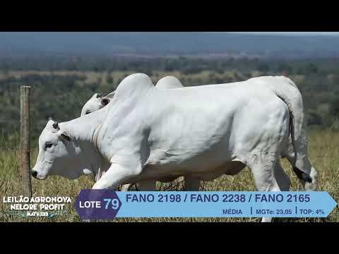 LOTE 79 FANO 2198 X 2238 X 2165
