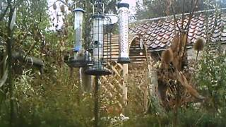 Squirrel Climbs Bird Feeder Pole