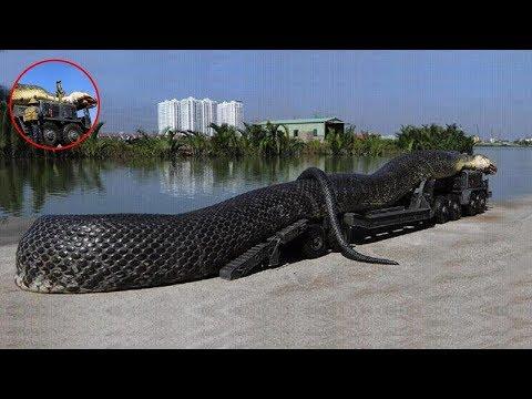世界上最大的蛇,19米長450公斤重,一口可以吞掉一個人!