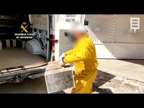 Detenido en Caravaca de la Cruz por robar abejas para venderlas fuera de la Región de Murcia