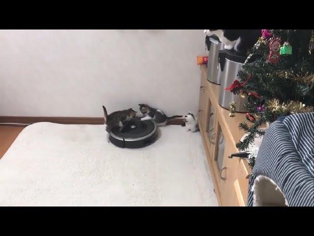 量産される子猫のルンバライダー