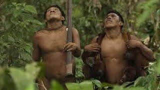 Video Amazon Jungle Amazon hutan berburu dengan cara alami download MP3, 3GP, MP4, WEBM, AVI, FLV September 2018