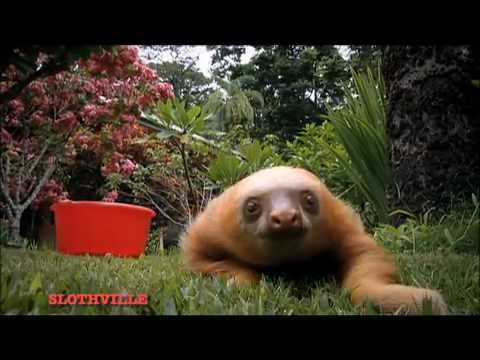 THE SLOTHS ARE COMING