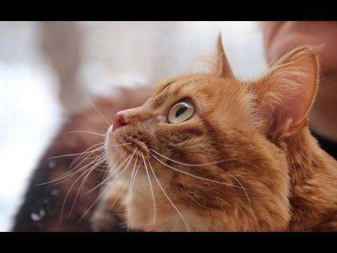 Учёные объяснили, почему кошки все опрокидывают