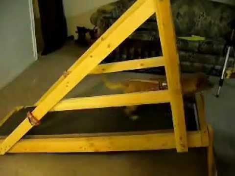 Dog Treadmill Plans Free