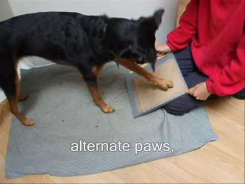Is Your Dog Scared of Having His Toes Nails Cut? Clipped? Dremelled ...