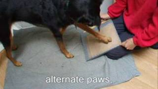 Is Your Dog Scared of Having His Toes Nails Cut? Clipped? Dremelled?