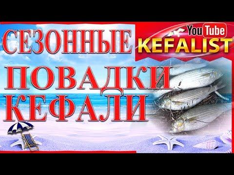 Рыбалка на кефаль! Сезонные #повадки #кефали на Черном море или как ловить кефаль с берега и заброд