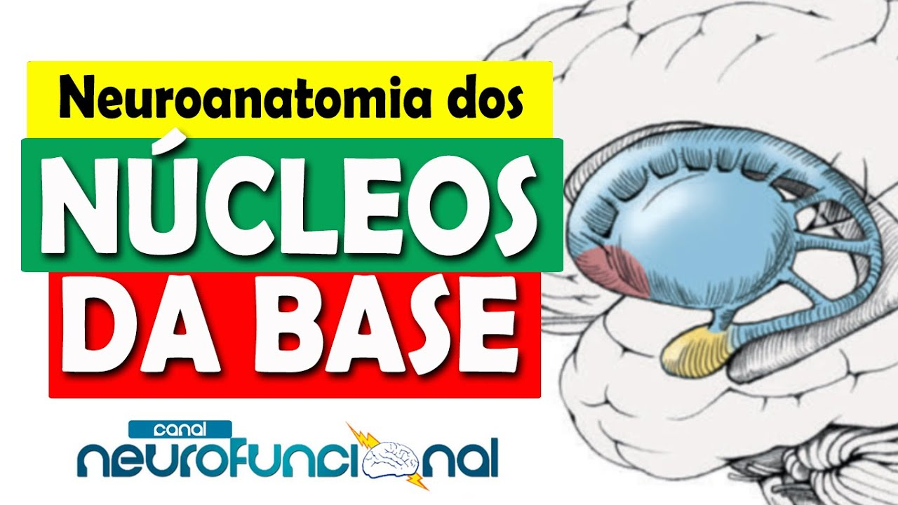 FUNCIONAL BAIXAR NEUROANATOMIA