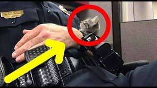 Cop Comforting A Homeless Kitten At The Police Station Has To Make A Very Tough Call