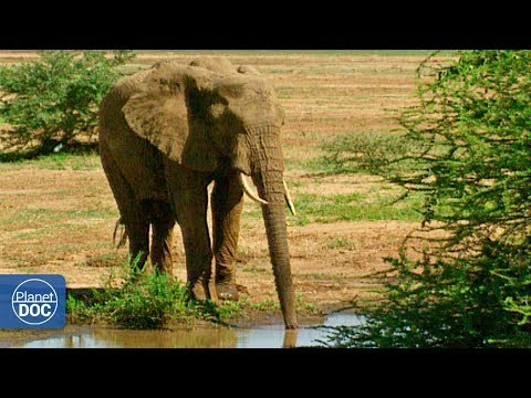 Tanzania: Lago Manyara. Parte 3
