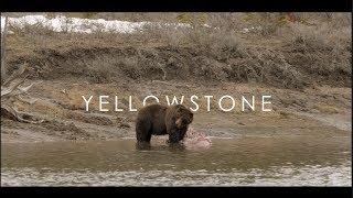 Yellowstone ||Natures True Beauty, Episode 1||
