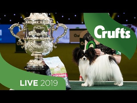 Crufts 2019 Day 4 - Part 2 LIVE
