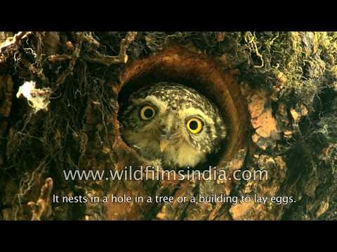 Owls - for children