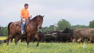 Louisiana Farm Life -- Joey Register