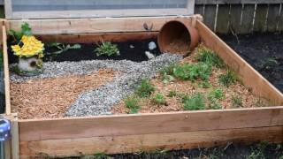 Outdoor Tortoise Enclosure. How to build your own enclosure!