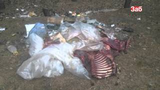 В Северном обнаружили туши животных Кобзон приедет в Читу Потерявшихся девочек нашли в Чите