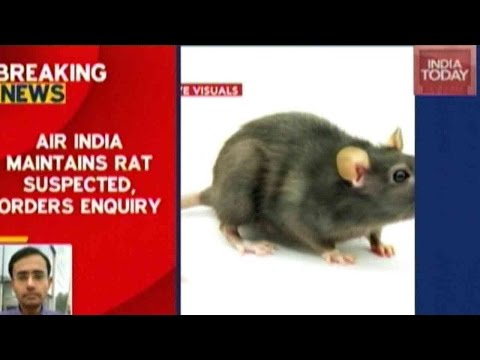 Rat Found On Flight, Air India Maintains 'It Is Suspected To Be A Rat'