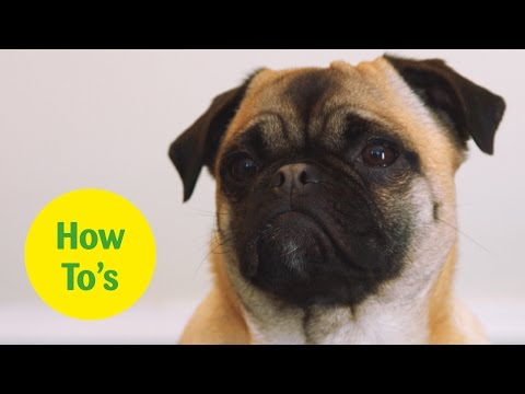 how-to-stop-your-puppy-nipping,-mouthing-and-biting