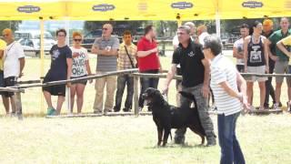 Thor Ztp Rottweiler Del 21 06 2014 - Video Niferre