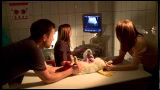 Регулярный осмотр животных с хроническими заболеваниями