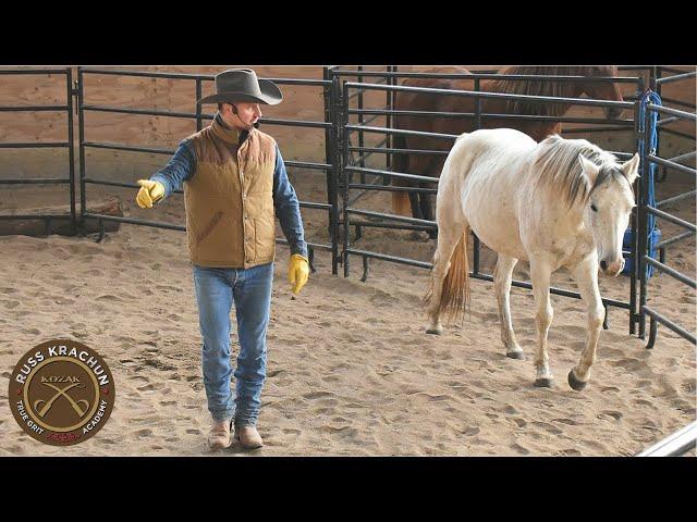 Discussion Round Pen Methodology Lesson 19 - Russ Krachun Kozak Horsemanship