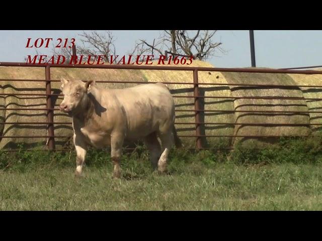 Mead Angus Lot 213