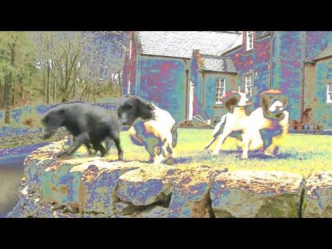 Fieldsports Britain - Drumlanrig Castle dogs + pigeons, rabbits and deer (episode 64)