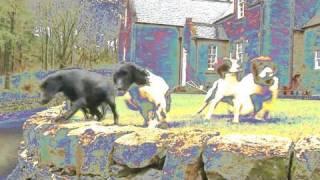 Fieldsports Britain  Drumlanrig Castle dogs + pigeons, rabbits and deer, episode 65