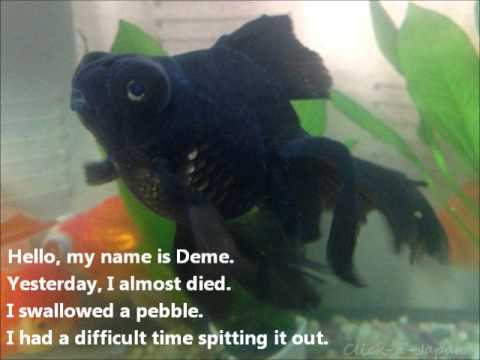 Goldfish Swallowed A Pebble