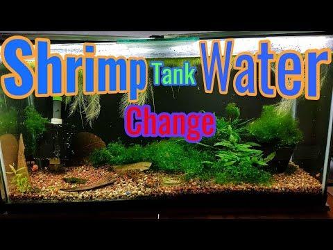 Shrimp Tank Water Change