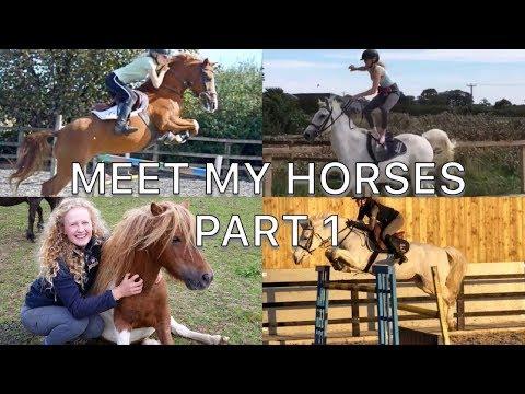 MEET MY HORSES [PART 1]