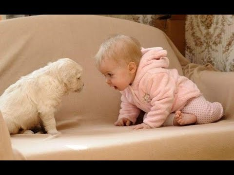 baby loves labrador puppy because they are best friends dog and