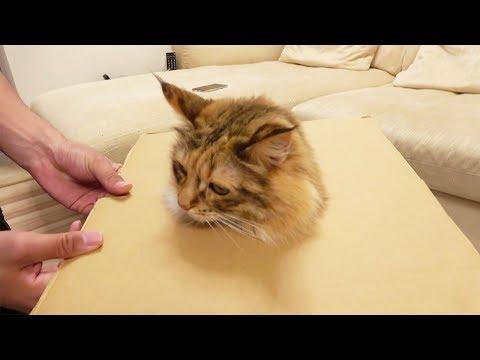 さらし首の刑に処された猫が可愛すぎるw