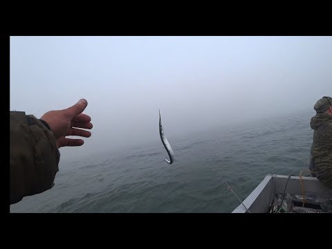 Диковинная рыба САРГАН. Мыс Таран. Рыбалка в Балтийском море.