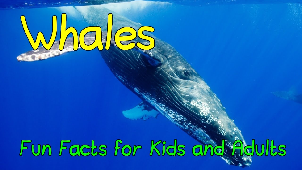 Amazing Facts about Whales - Fun Facts for Kids and Adults - YouTube
