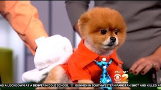 Demo: Pamper Your Pooch On National Pet Day