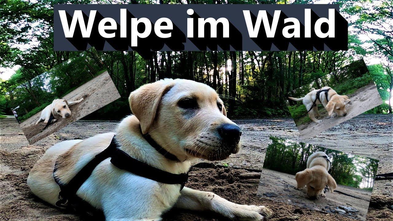 Hundewelpe das erste mal im großen Wald