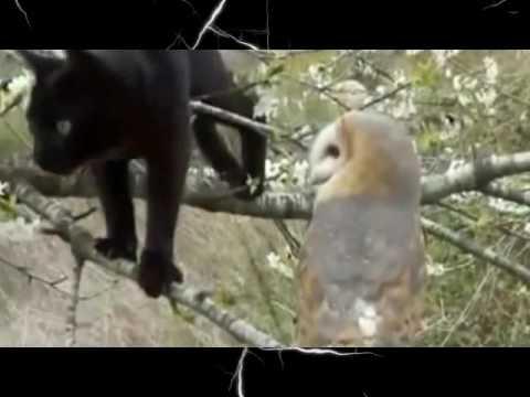 Вопрос: Будет ли сова дружить с кошкой?