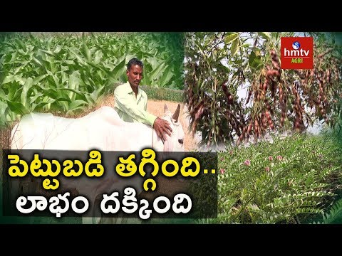 Natural Farming | Maize & Red Gram Cultivation | hmtv Agri