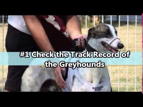 Greyhound Tipping Clues for a Sure Win