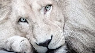 White Lion • When The Children Cry •