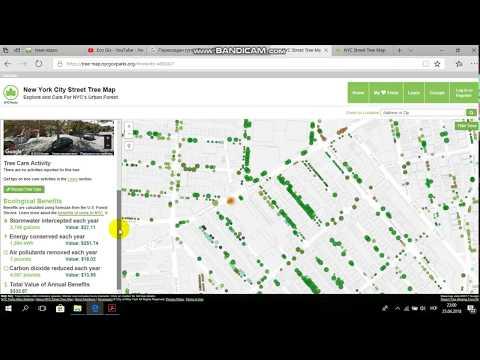 Карта дерев Нью - Йорку  New York City Street Tree Map  