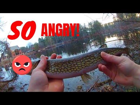 Catching SO Many Aggressive Fish With Razor Sharp Teeth