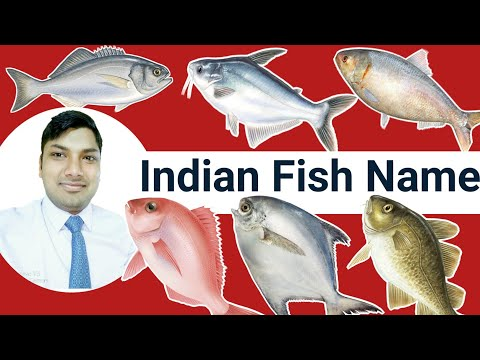 Fish Names | Name Of Indian Fish Hindi And English