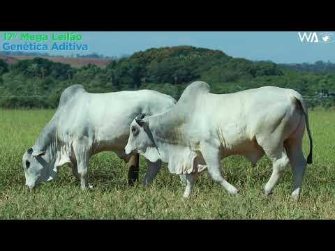 LOTE 146 - DUPLO - REM 10116, REM 10334 - 17º Mega Leilão Genética Aditiva 2020
