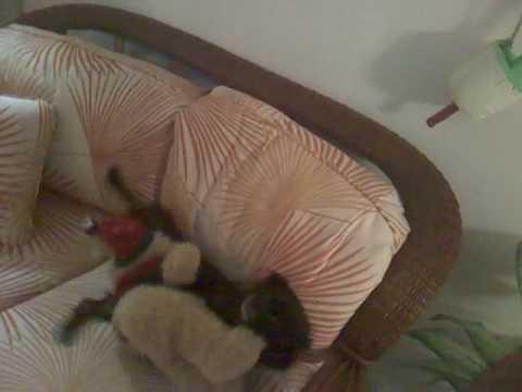 DOG FINDS SEX TO PUKEKaynak: YouTube · Süre: 20 saniye
