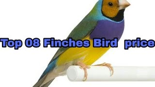 Top 08 Finches Bird  price