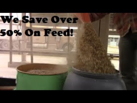 How To Cut Your Feed Cost In Half!?! Saving Money On The Homestead!